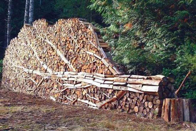 Firewood Tree found at Being Poetry blog